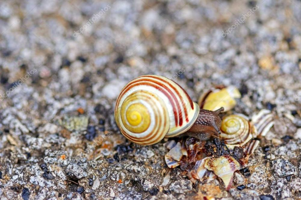 depositphotos_88033448-stock-photo-brown-lipped-snail-crawling-on